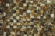 Petrified Wood Brown Jurrasic
