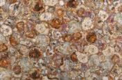 Petrified Wood Multicolor
